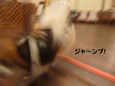 2012511-11.png