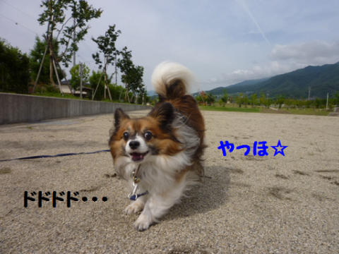 2012625-3.png
