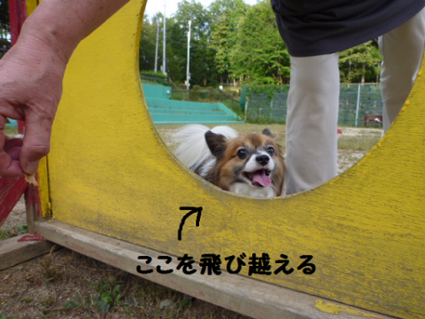 2012926-10.png