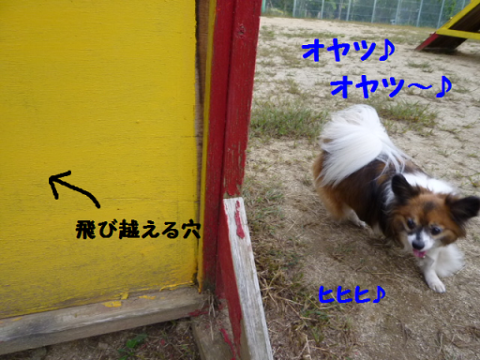 2012926-11.png