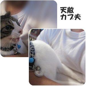 1cats_20120616171636.jpg