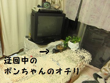 IMG_7949 2012 (9