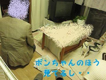 IMG_7949 2012 2