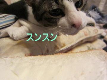 IMG_8111 2012 (10