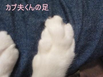 IMG_8111 2012 (7