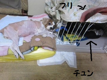 IMG_9100 2012 5