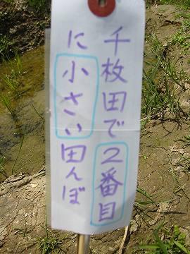 IMG_2251 田植え (49)