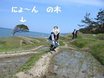 IMG_2251 田植え (41