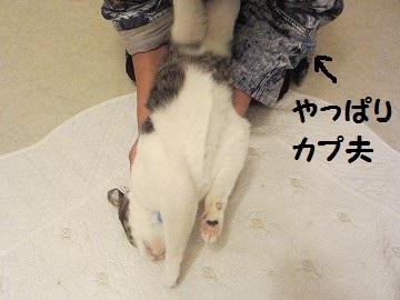 IMG_8874 2012 (84
