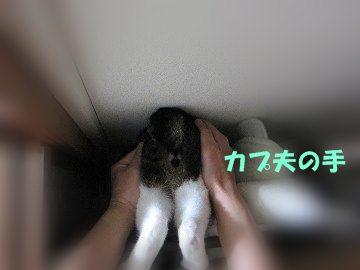 IMG_4838 2012 (3