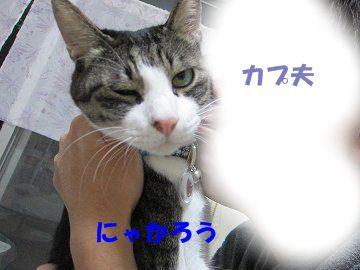 IMG_1036 2011 21
