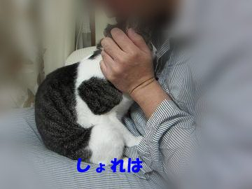 IMG_0945 2011 3