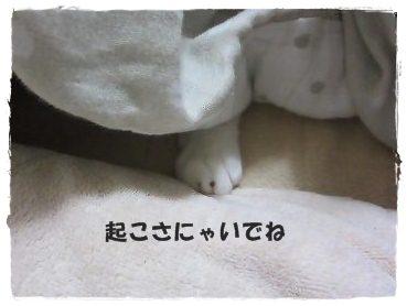 IMG_7532 2012 2