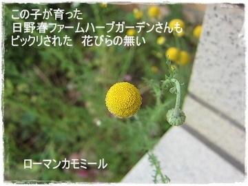 IMG_0401b