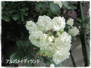 IMG_0390b
