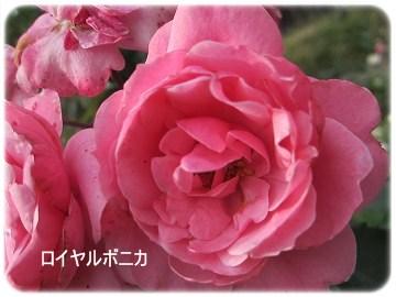 IMG_0580 2012 (11