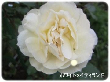 IMG_0580 2012 (9