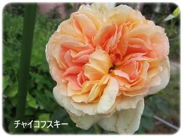 IMG_0580 2012 (8