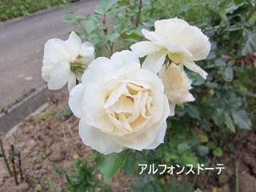 IMG_0761 2012 (2