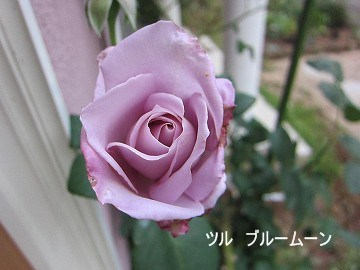 IMG_0761 2012 (1