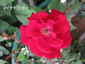 IMG_0580 2012 (14)