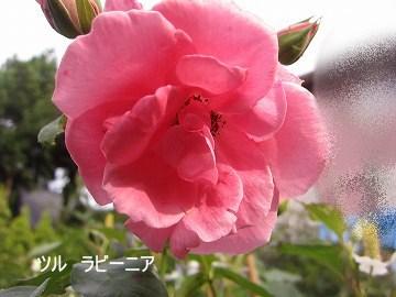 IMG_0580 2012 (10