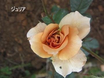 IMG_0421 2012 (3