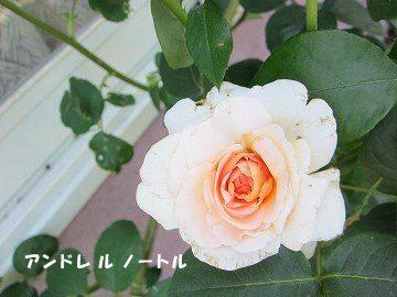 IMG_0433 2012 (377