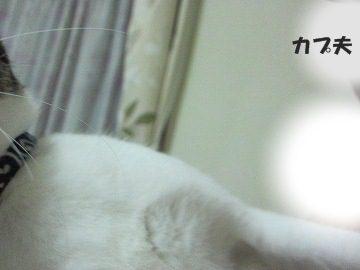 IMG_1093 2012 (45