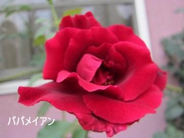 IMG_1613 2012 (7