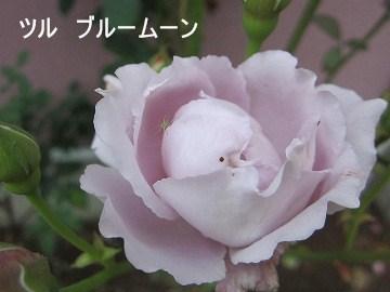 IMG_1613 2012 (1