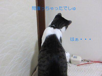 IMG_3948 20128 (20
