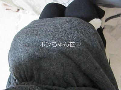 IMG_0139 2012秋 (53)