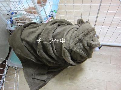 IMG_0139 2012秋 (35)