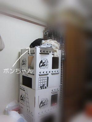 IMG_0598 2012秋 (1)