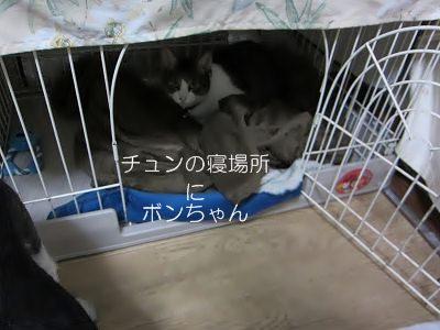 IMG_0730 2012秋 (13)