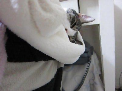 IMG_0840 2012秋 (64)