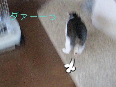 IMG_2154 2012 秋 (212)