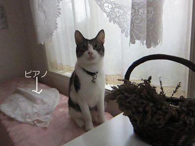 IMG_2154 2012 秋 (451)