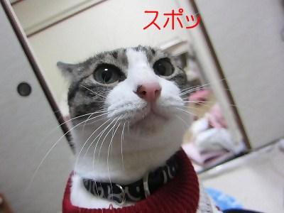 IMG_2449 2012冬 (35)