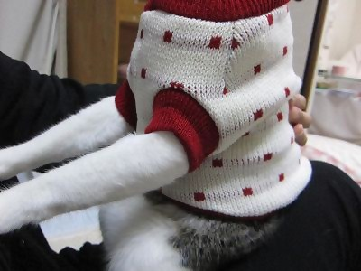 IMG_2449 2012冬 (38)
