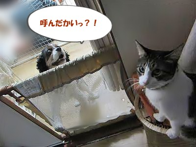 IMG_9667 2012秋 (108)