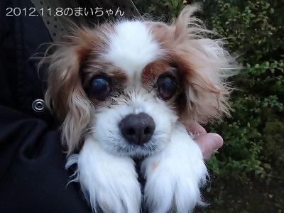 IMG_0840 2012秋 (49)