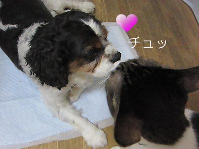 IMG_9667 2012秋 (4)