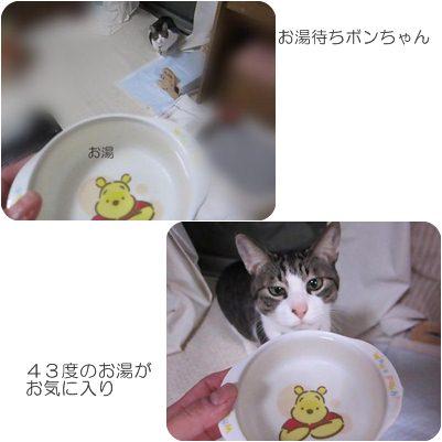catsあ