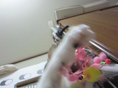 IMG_0963 2012秋 (95)