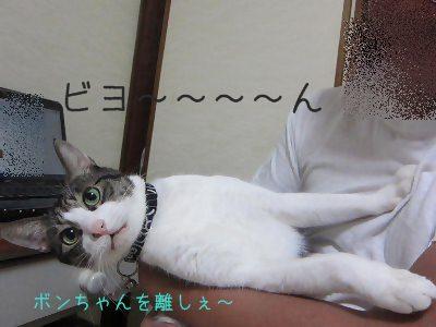 IMG_1173 2012秋 (27)