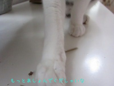 IMG_2154 2012 秋 (567)