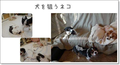 cats狙う