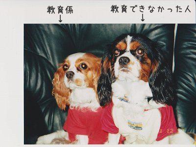 2001~2002 まい けん (102)